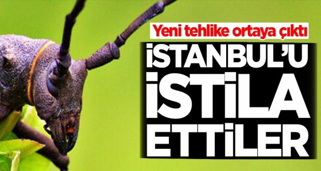 İstanbul'da büyük tehlike! İstila ettiler